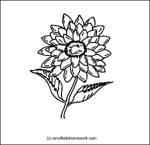 Dahlia Flower Outline and Coloring Picture with facts