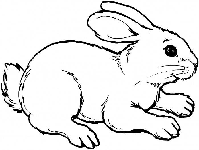 Rabbit Outline Picture for coloring