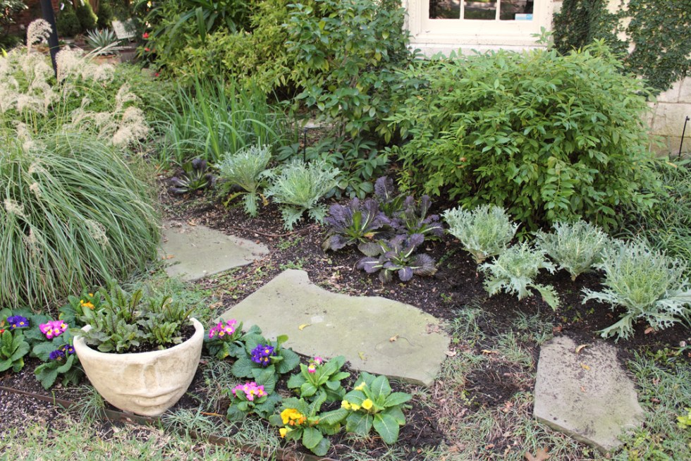 (above) This northeast corner (of my house) receives more sunlight than the rest of the front bed. The White Peacock Kale, Giant Red Mustard, and the smaller mustard plant in the face pot do well in this spot.