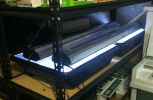 Testing Bins and Grow Lights for the Growing Greens Challenge - 2/14/16