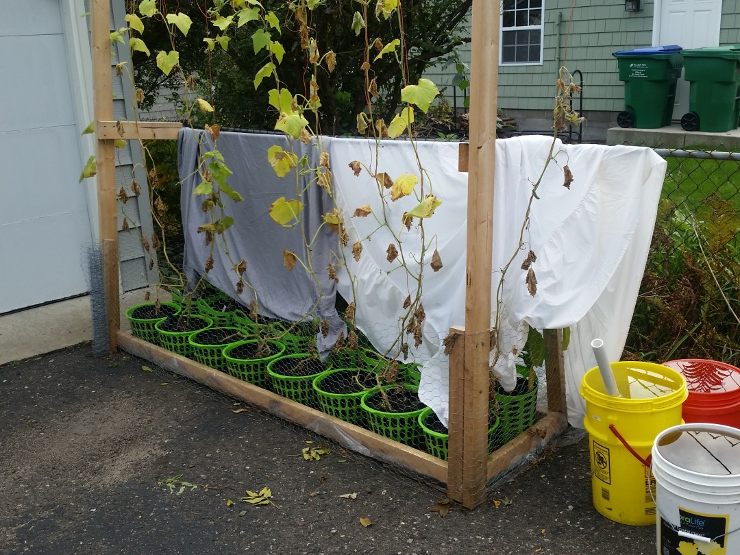 Frost; Frost Protection; Extending Garden Season; Raised Beds; Garden; Hybrid Rain Gutter Grow System; peppers; hydroponics; Larry Hall; Grow Bag Garden System; herbs; vegetables; wicking beds