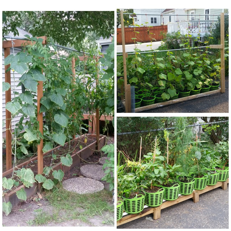 Gardening; Gardening Resources; Raised Beds; Vertical Gardening; Tomatoes; Herbs; Potatoes; Beans; Onions; Peas; Hybrid Rain Gutter Grow System; peppers; hydroponics; Larry Hall; Grow Bag Garden System; dill; herbs; jalapenos; wicking beds