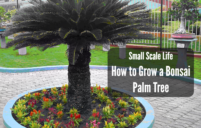 Bonsai Palm Tree; Sago Palm; Trees; Decorative Trees