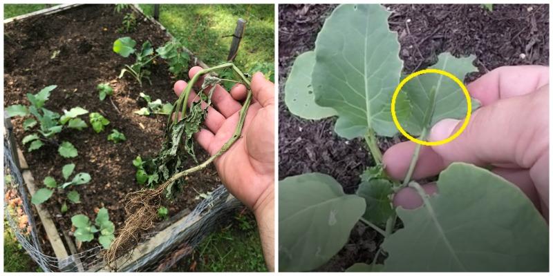 Garden Update: Common Garden Pests
