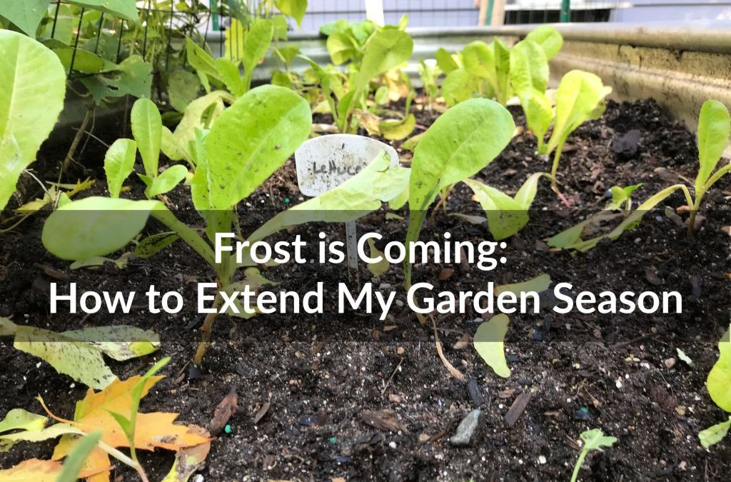 Frost is Coming: How to Extend My Garden Season