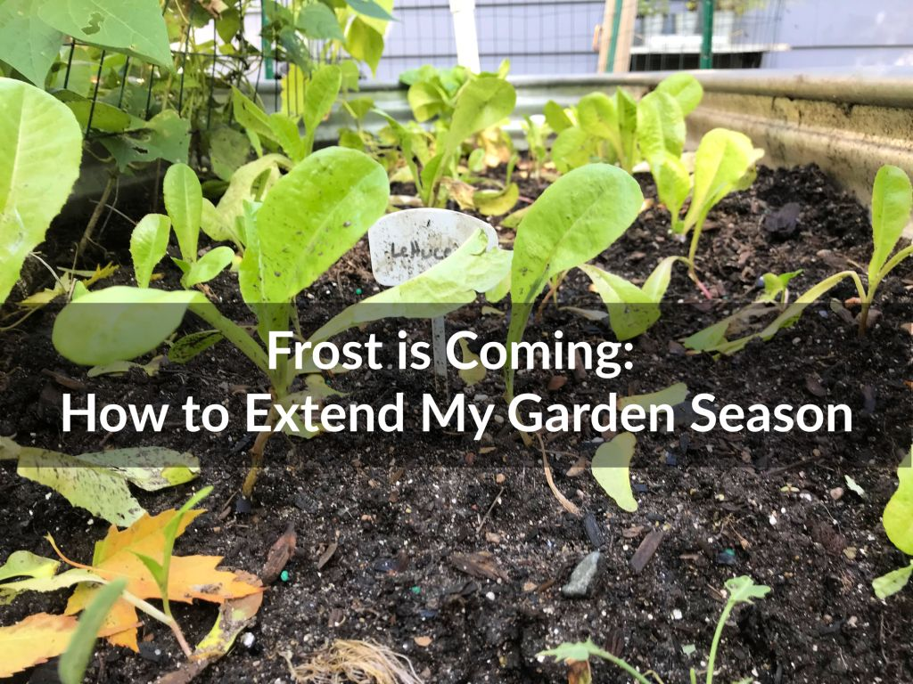 How to Extend my Garden Season, Frost, Greens