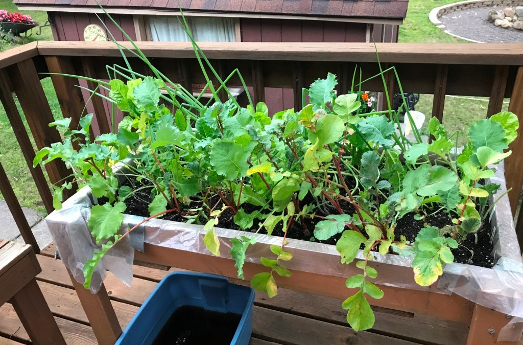 Victory Gardens, Container Gardens