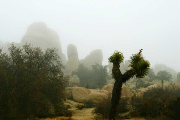 The Best Hikes In Joshua Tree