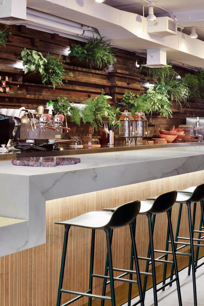medium_plant-cafe5