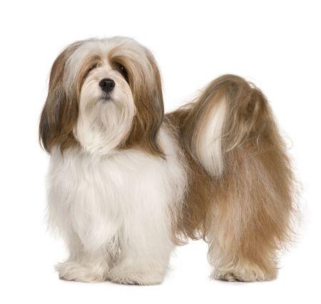Small Dog Breeds