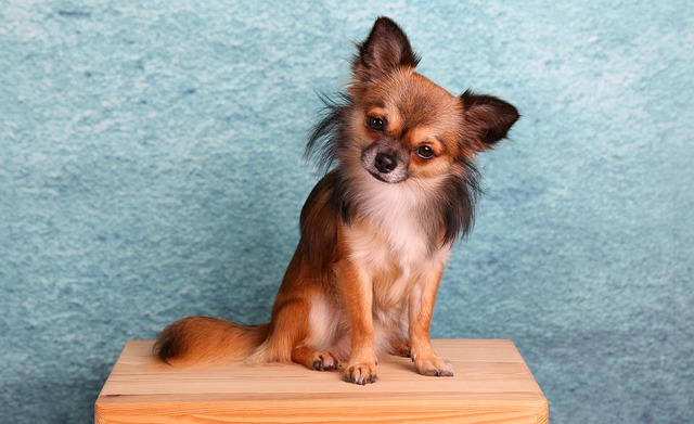Mexican Dog Breeds | The Smart Dog Guide