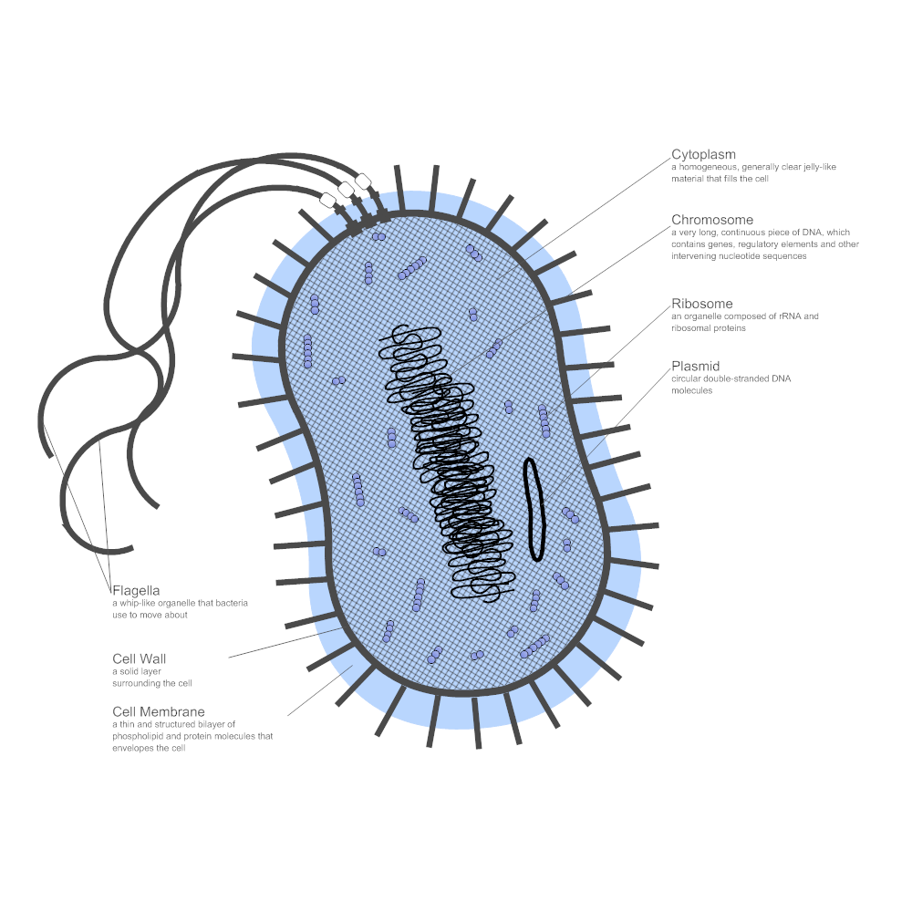 example of family tree diagram stereo jack plug wiring bacteria