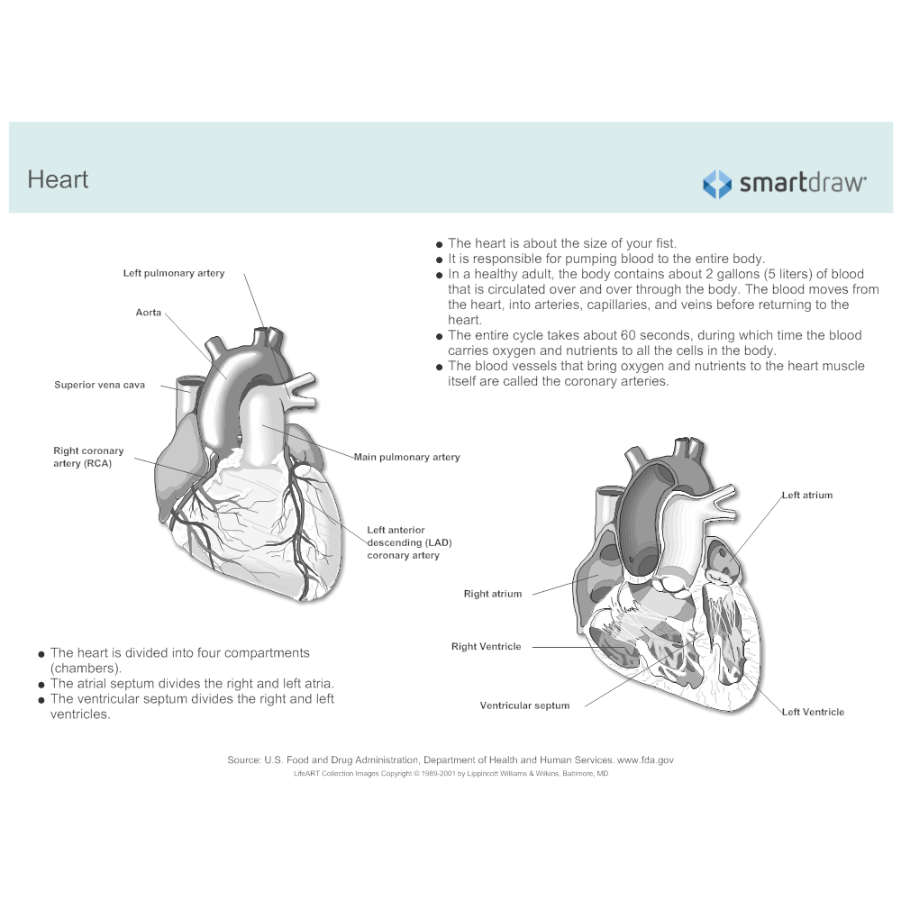 medium resolution of  example image heart