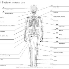Frog Head Diagram Labeled 2001 Pt Cruiser Stereo Wiring Skeletal System - Types Of Diagrams