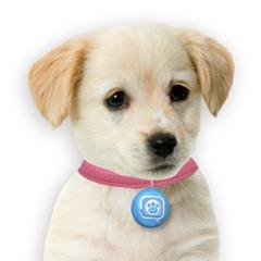 puppy tweets gift