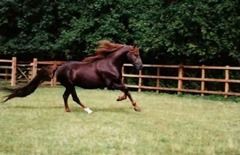 Annihilator, the second expensive horse