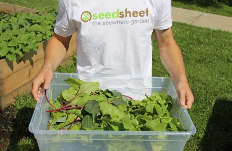 Smarter Service Gallery Seedsheet