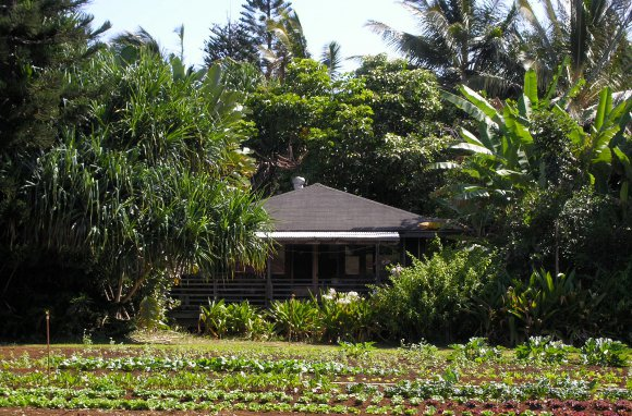 Great For Beach Bums... North Country Farms (Kilauea, Kauai, Hawaii)