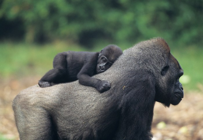 Daily Daydream: Bwindi Impenetrable National Park, Uganda