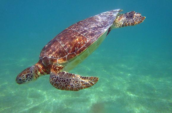 Akumal, Quintana Roo