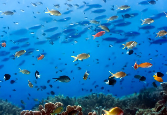 Daily Daydream: Buck Island Reef, U.S. Virgin Islands