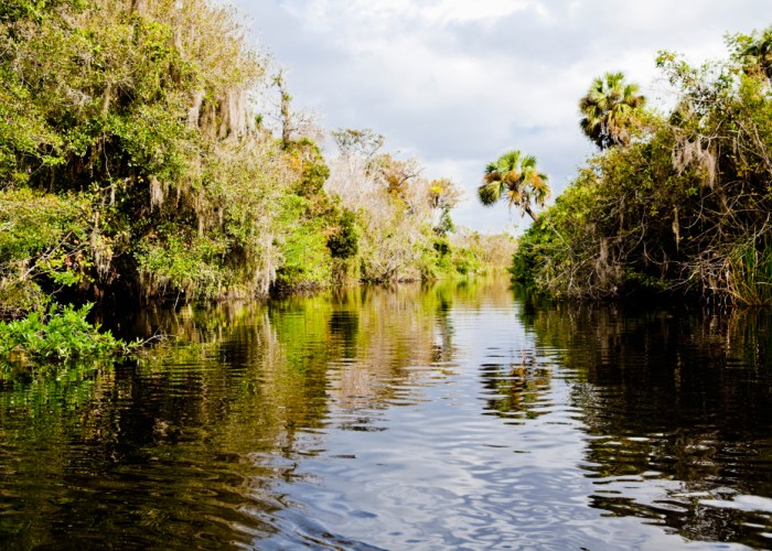 Everglades National Park Enviro-Tour with Caribbean Watersports