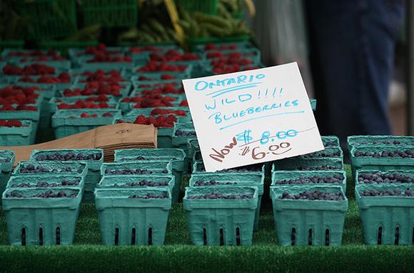 Ontario's Wild Blueberries