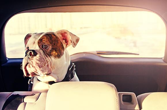 Pet-Travel Tips