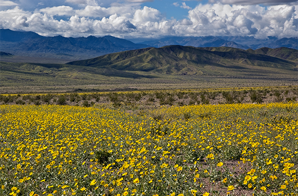 Winter: Death Valley National Park, California and Nevada
