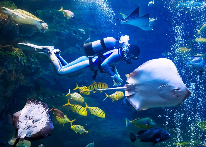 What It's Like to Dive with Sharks at Australia's Manly Sea Life Sanctuary