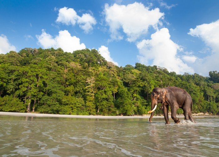 elephant on beach