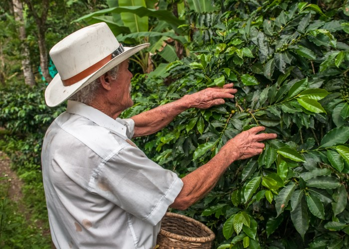 things to do in colombia coffee triangle
