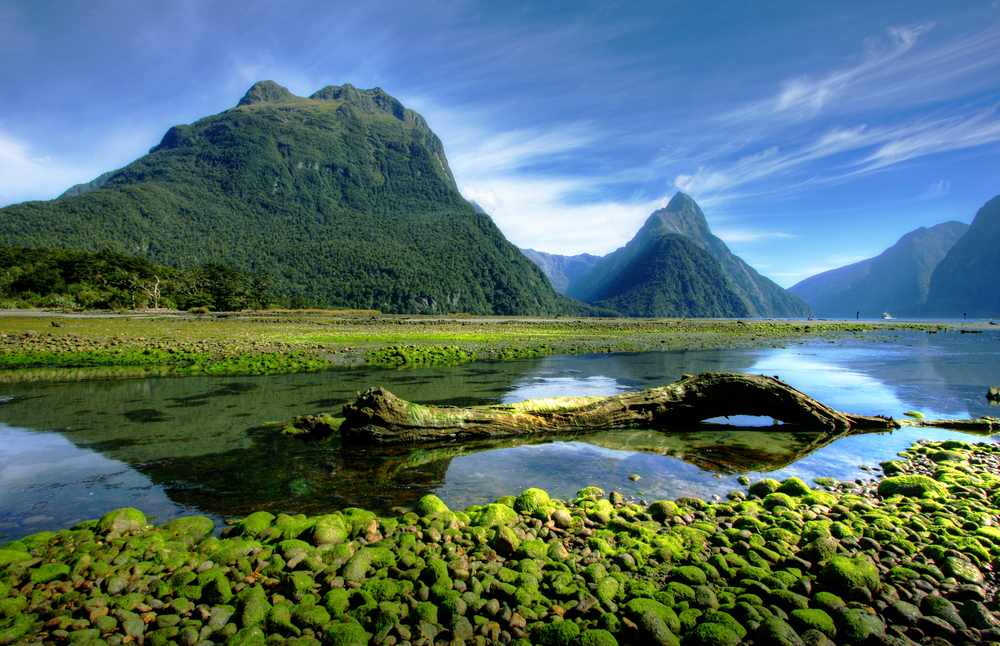 reflection and nature at fiordland national park