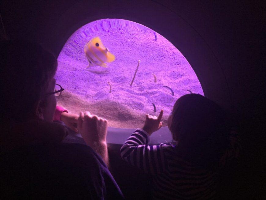 child looking into tank at florida aquarium in tampa