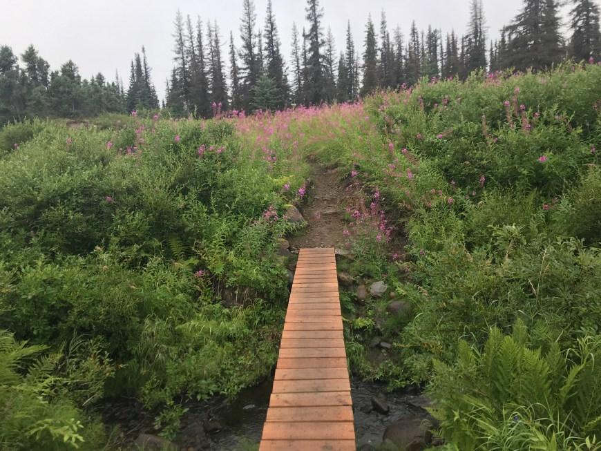 Denali state park hiking path.