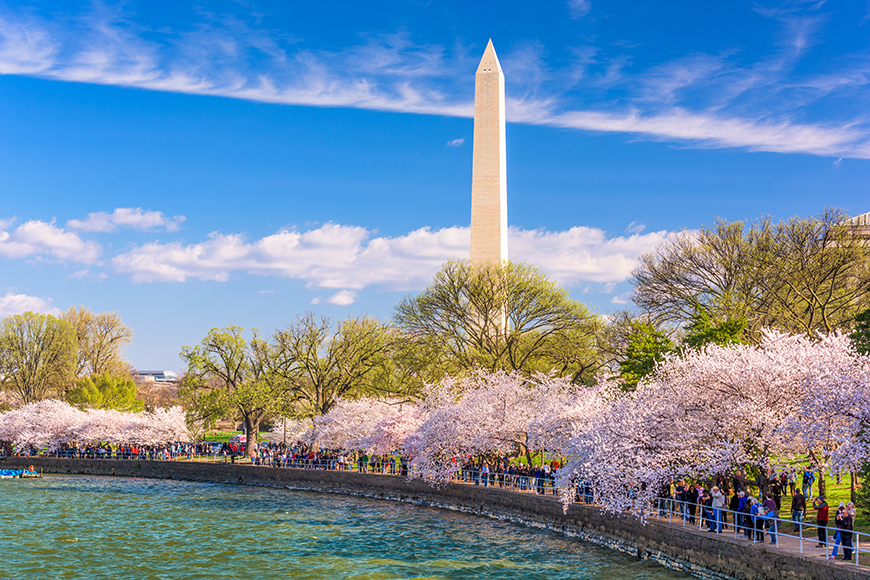 washington monument with cherry blossoms tidal basin.