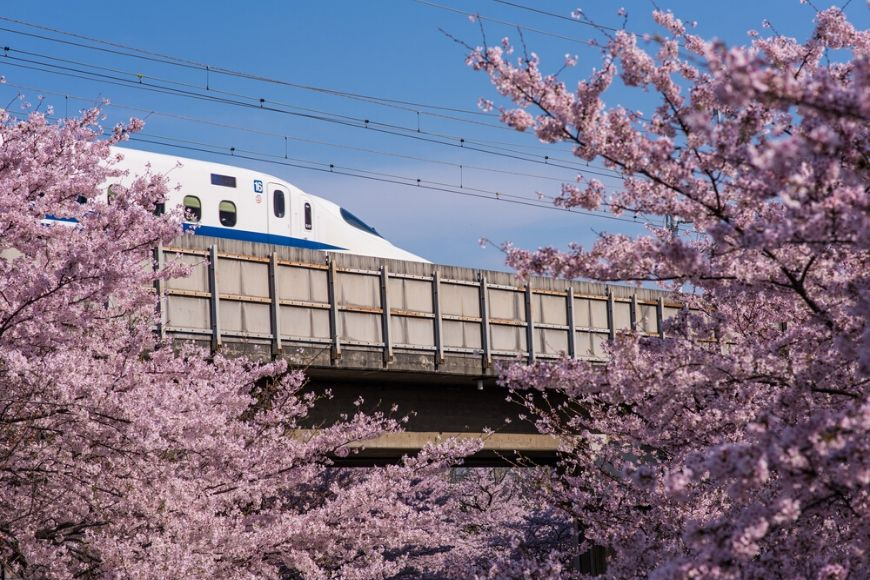 cherry blossom japan bullet train.