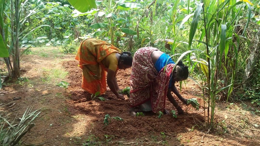 52-YO TN Woman's Revolution Gives Women Farmers Millets to Battle Climate Change!