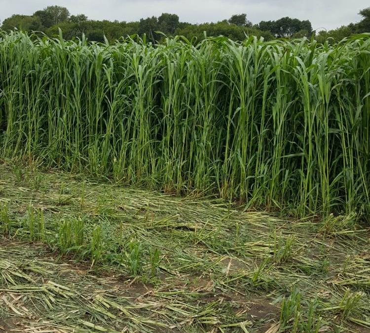 Weathering the weather—options for haying, grazing and silage