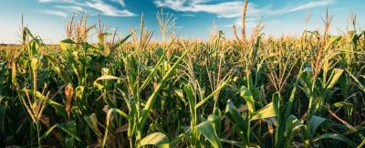 Climate change eats into output of top 10 food crops