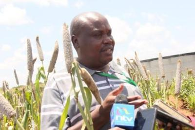 New Hybrid Seeds For Sorghum And Millet Farmers