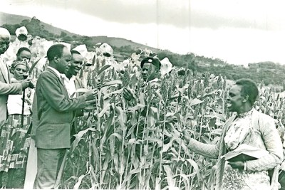 How colonial policies eclipsed millet, sorghum