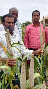 Farmer brothers set to reap it rich with a local pearl millet variety