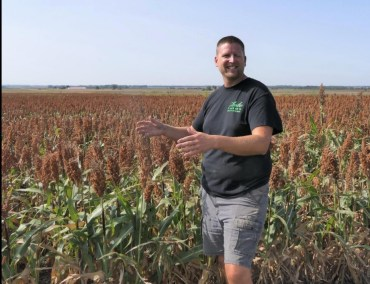 Central Kansas seeing higher milo yield
