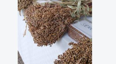 Boast for sorghum farmers following directive of flour blending