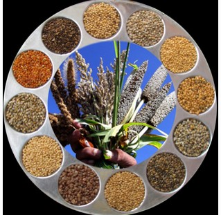 Source millets for PDS from local farmers: Panel