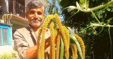 Himachal Farmer Revives Ancient Crop System That Saves 50% Water, Has 0 Input Costs