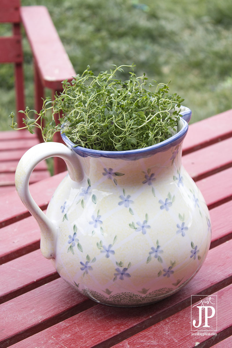 Use a pitcher to plant an herb garden - get pitchers for less than $5 at thrift shops like Deseret Industries.