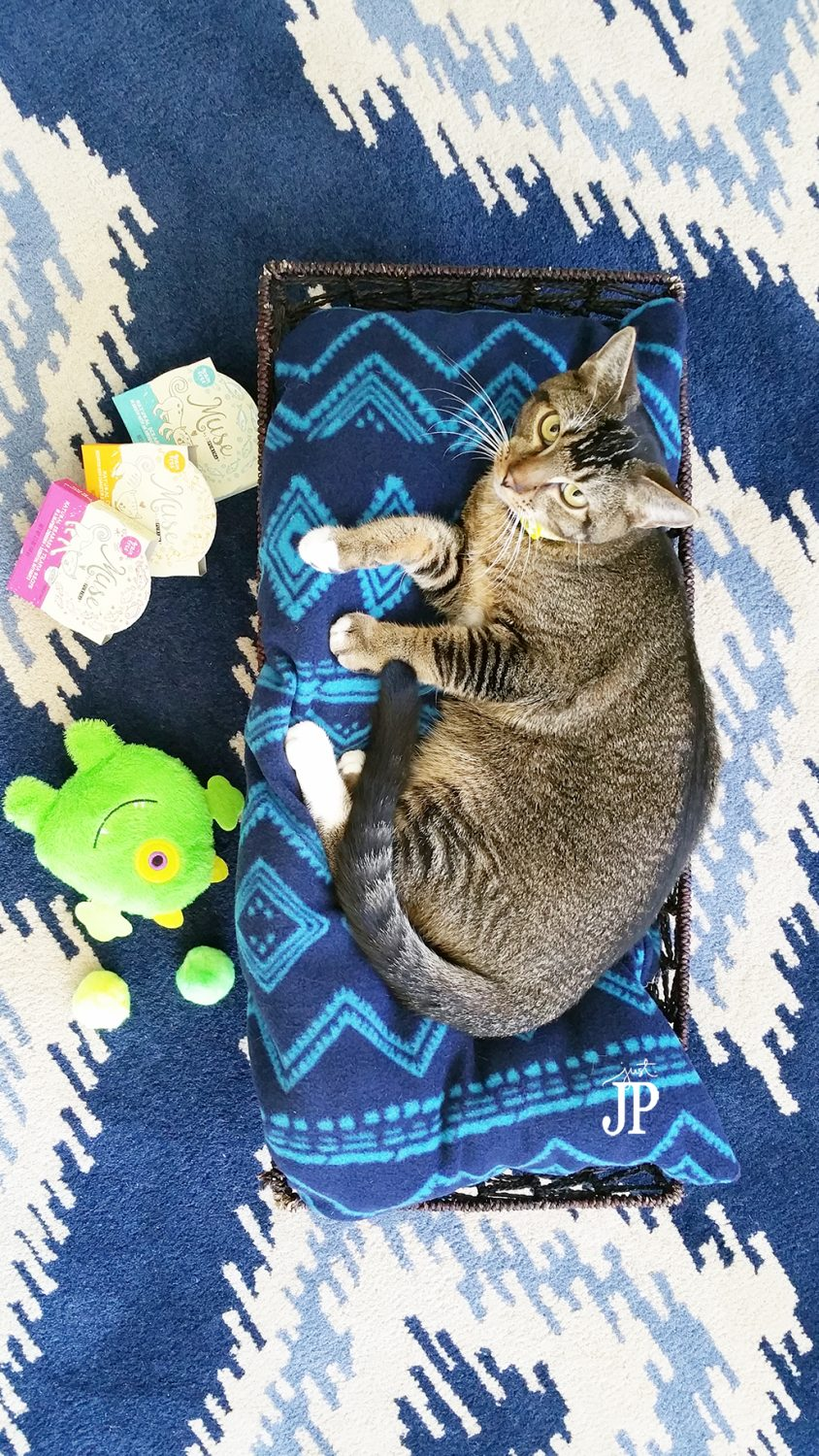 DIY-Cat-Bed-with-Purina-Muse-JPriest