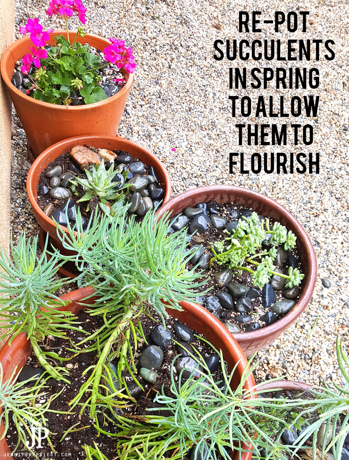 Repot-succulents-in-spring-to-allow-them-room-to-grow-jenniferppriest